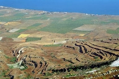 greek agriculture