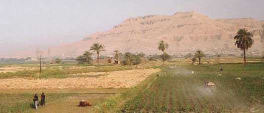 Daily Life of a Farmer in Ancient Egypt